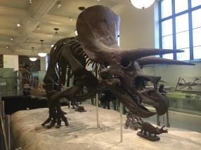 Natural History Museum NYC