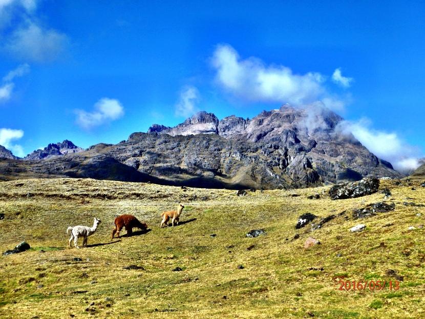 Hiking to Machu Picchu – The LaresTrek